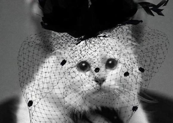 ファッション界の重鎮、カール・ラガーフェルドの寵愛を受けていた愛猫「シュペット」は今?