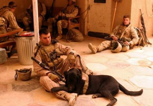 dogs_in_army_21