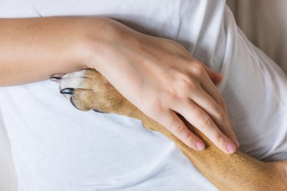 火事で全身にひどいやけどを負った犬、奇跡的な回復を遂げセラピー犬へ(アメリカ)