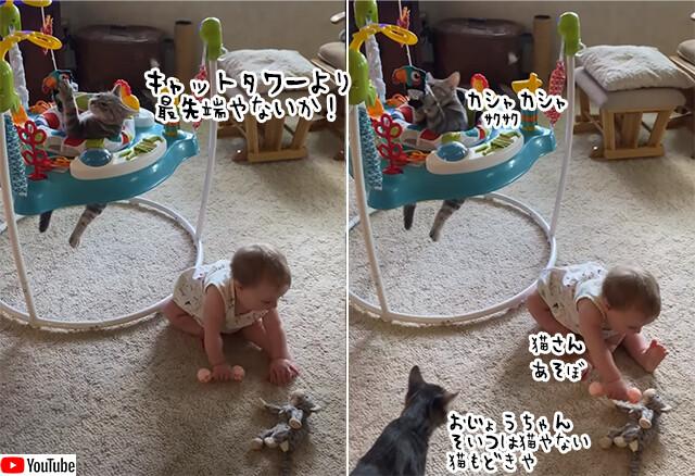 人間の赤ちゃん用遊具を占拠する猫、無心におもちゃで遊び倒す
