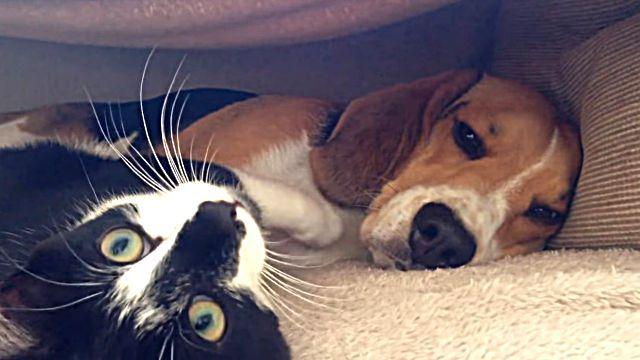 「ねえねえ、いっしょに遊ぼうよ」「いいけどちょっとぬくまってからな」寒い夜は犬と子猫の仲良しさんを見てとろけよう