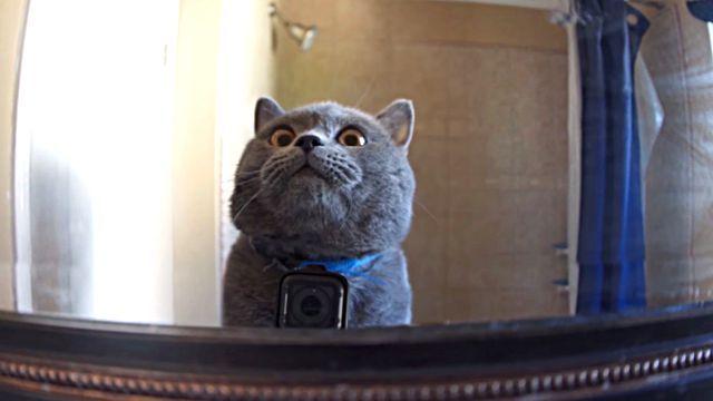 飼い主元気で留守がいい?お留守番中の猫にカメラをつけて、その行動をこっそり監視してみた結果