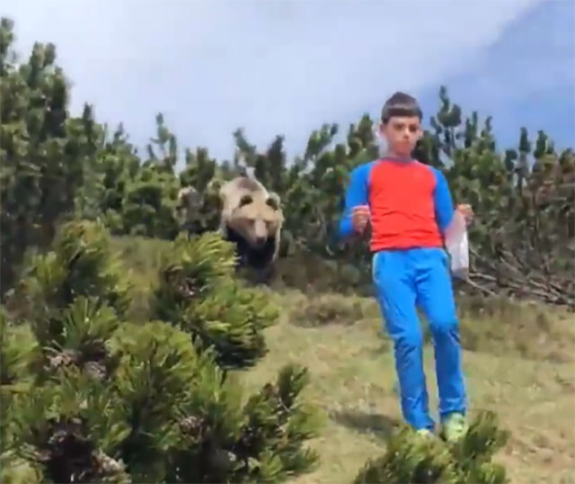 クマのストーカー