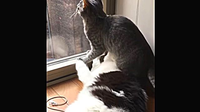 catcat4