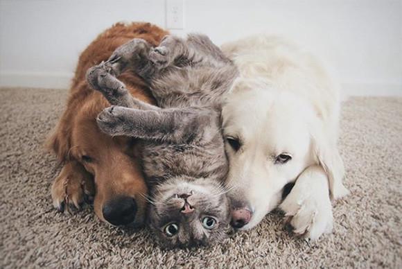 犬+猫+犬の化学反応がすごい!いつでも一緒の3匹トリオから放出される幸せ物質を満喫しよう