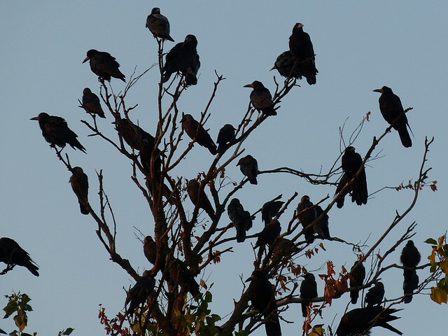 birds-705043_640