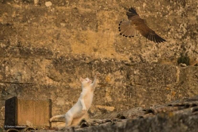 wildlife-photographer-of-the-year-2017-49e