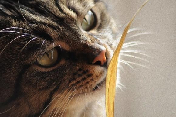 cat-4416972_640_e_e