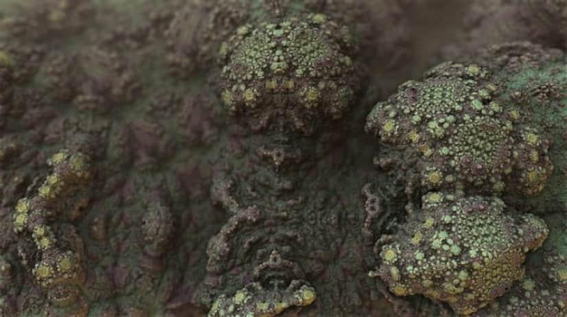 mold-1482666_640_e