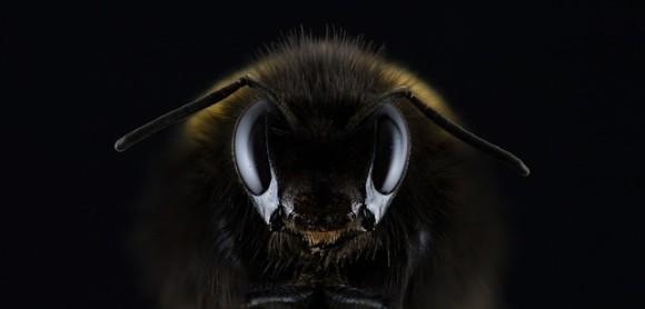 ミツバチにもアスペルガーが?社会性に乏しいミツバチに人間の自閉スペクトラム症に似た遺伝症状を確認(米研究)