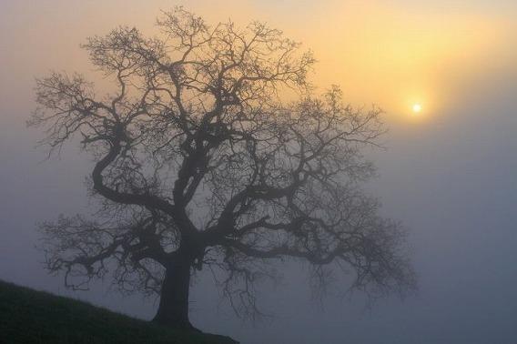fog_22
