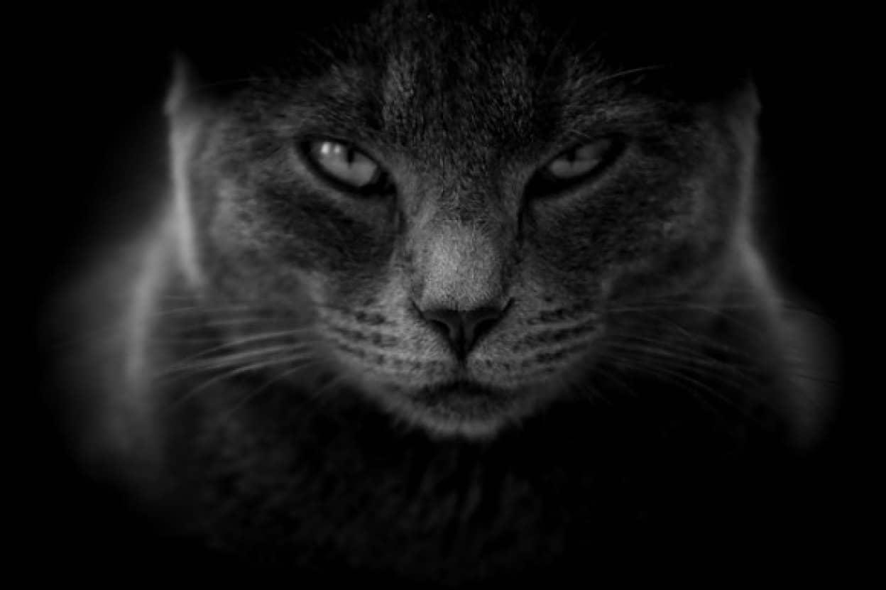 cat-3386220_640_e