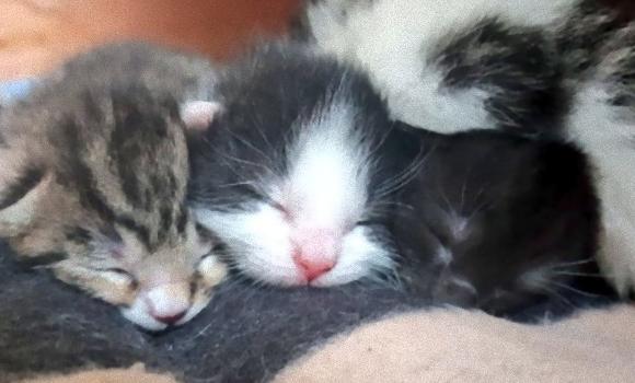 大丈夫、すこぶる元気です!見知らぬ猫がベッドの下で産んだ子猫たち、その後の愛情いっぱいの成長記録(イギリス)