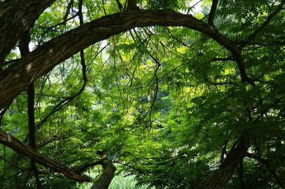 tree-141692_640_e