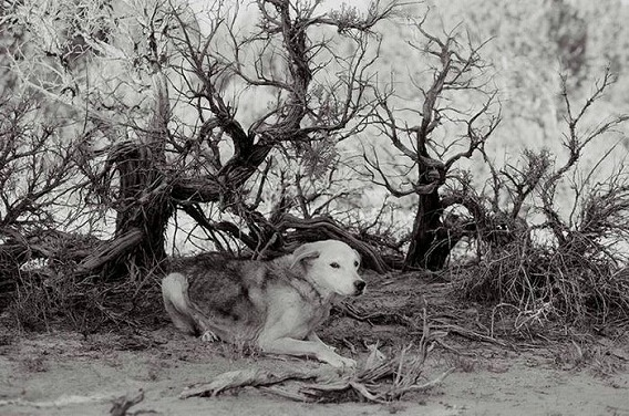 old_dogs_22