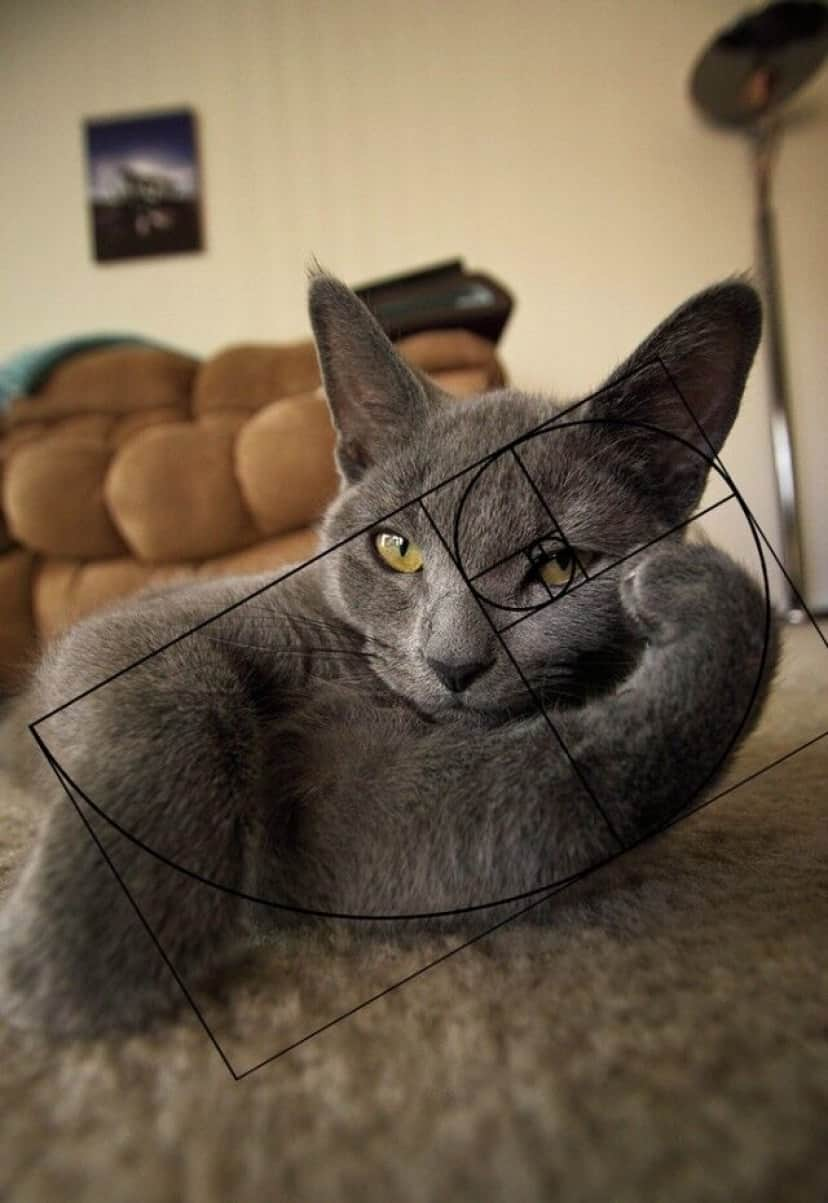 fibonacci-composition-cats-furbonacci__700_e