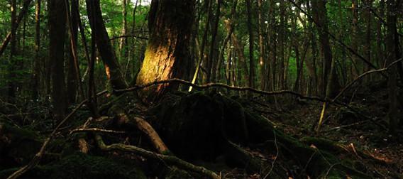 地球上で最も人気のある10の自殺スポット。1位は日本の青木が原