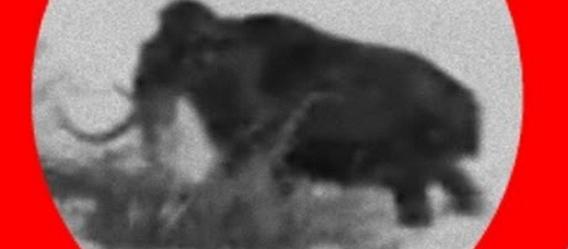 マンモスは20世紀まで生きていた?第二次世界大戦中にロシアで撮影されたマンモスらしき生物の動画(1943年)