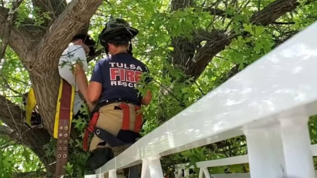 木から降りられなくなった猫を助けにいった飼い主、自分も降りられなくなるという悲劇