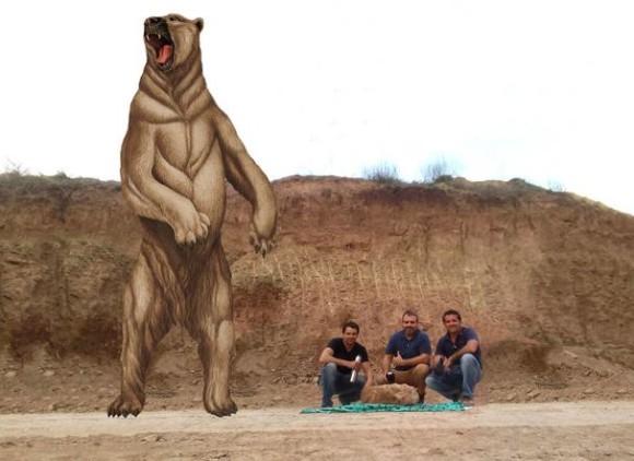 70万年前を生きた世界最大種のクマ「アルクトテリウム・アングスティデンス」の化石が発見される(アルゼンチン)