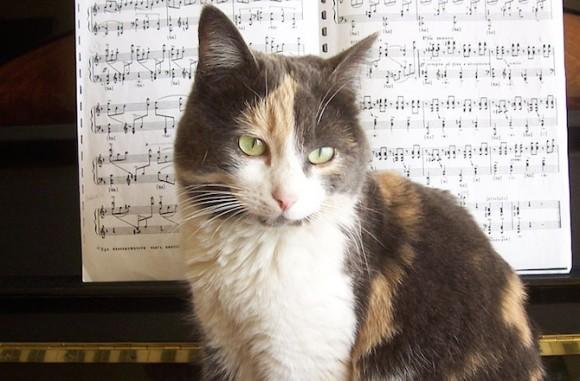 猫満足。思わず猫が耳を傾ける、科学的に検証された「猫の為 ...