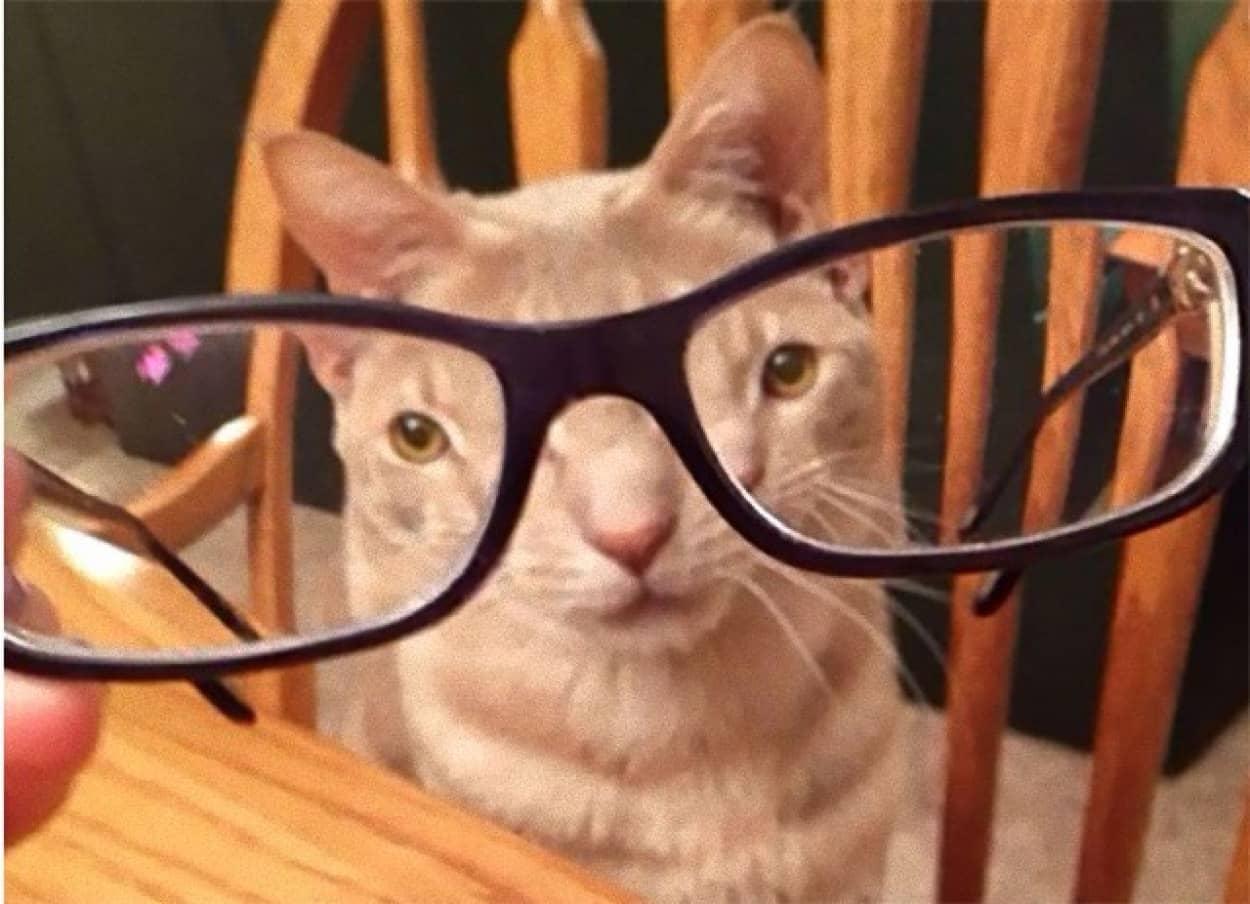 ガラスや眼鏡を通してペットの顔をゆがませてみた