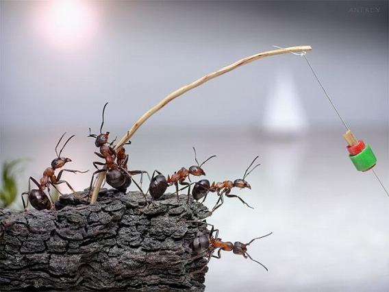 ants_05
