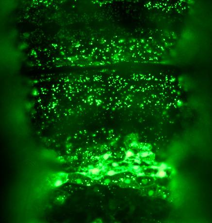 090415-03-glowing-green-worms_big