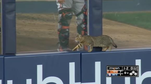 野球の試合中に乱入した猫、選手と観客の人気をかっさらう。テレビカメラも猫まっしぐら