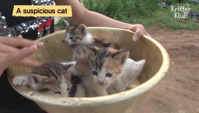 えっ、自分の子供たちじゃなかったの?母猫に育児放棄された子猫たちを引き取る猫