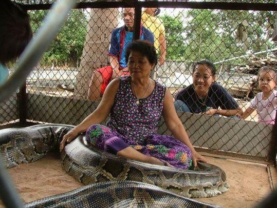 giant_pet_snake_03