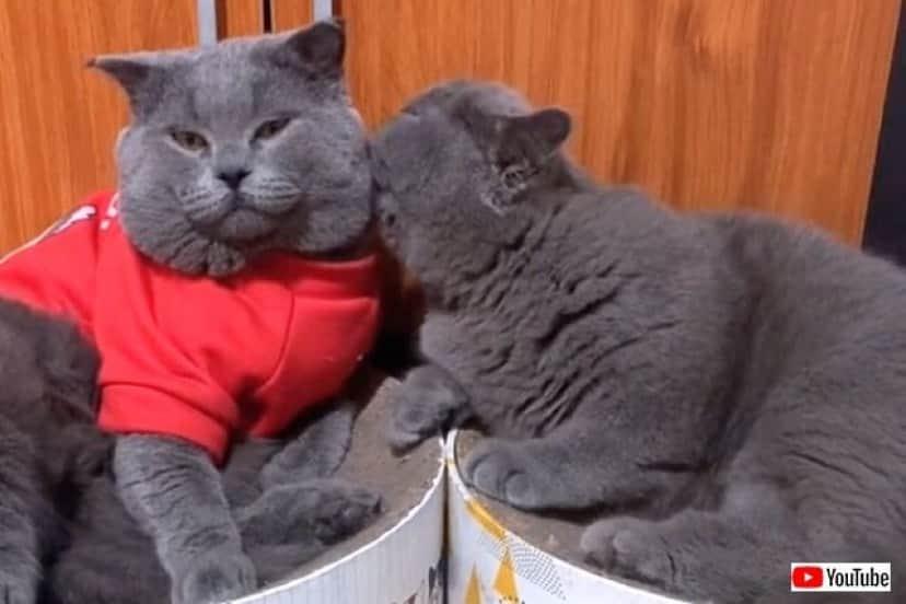 cartooncats0_640