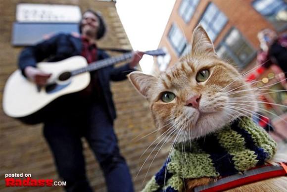 運命の出会い。1人のホームレスの人生を救った1匹の猫の物語