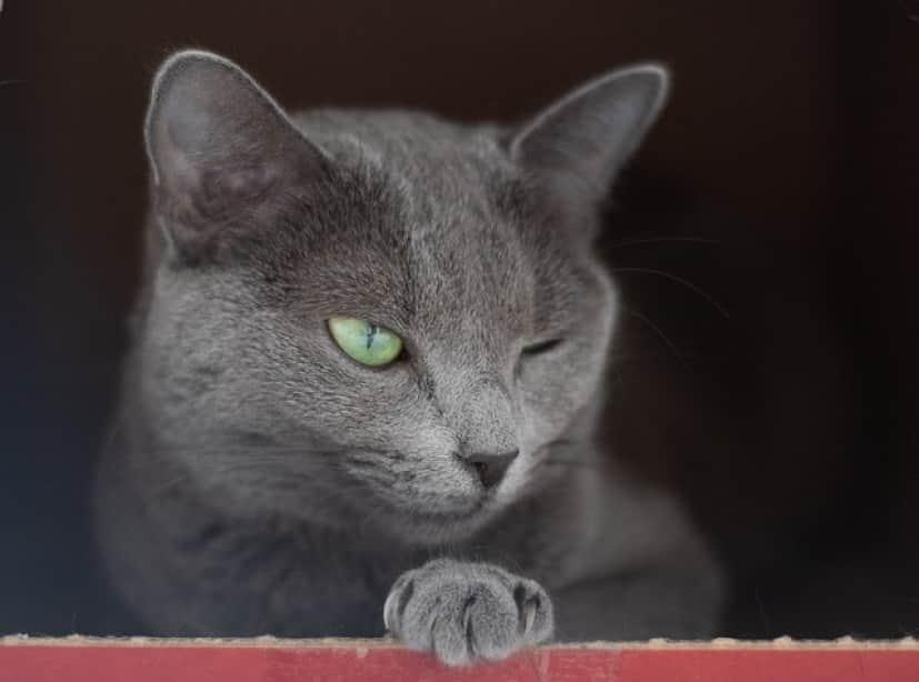 cat-4540441_640