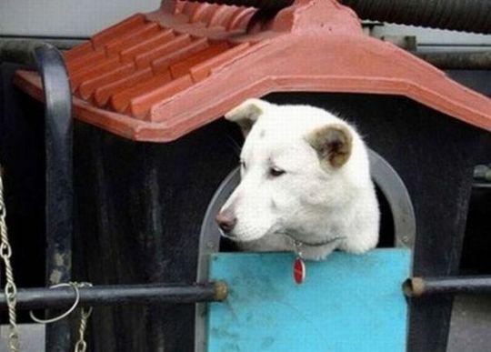 dog_house_01