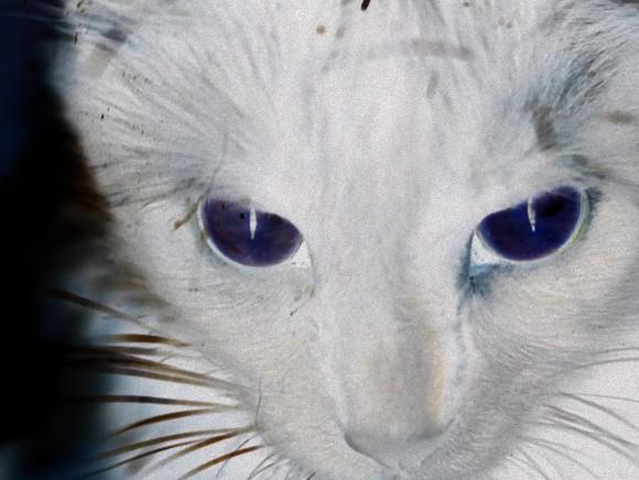 猫は宇宙人が送り込んだスパイなのか? ネットに流れるあの噂を検証する