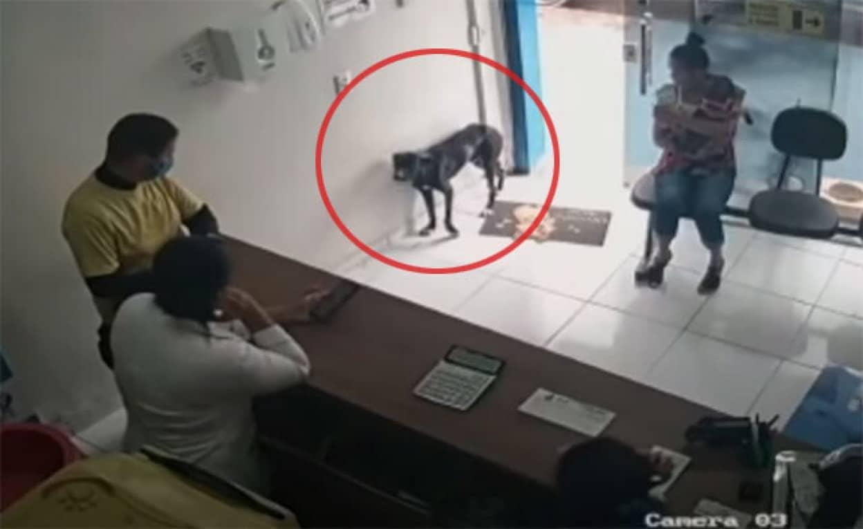 怪我をした野良犬が動物病院に助けを求めにやってきた