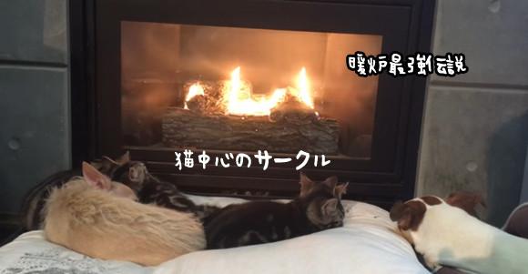 暖炉を囲む猫ズと犬ズ。この一言で犬の天下に。