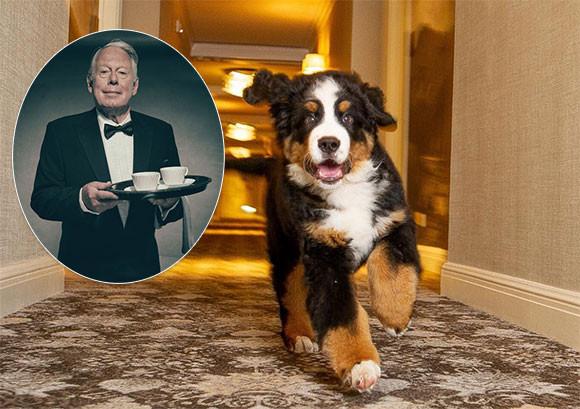 犬好き必見!高級リゾートホテルが看板犬にお仕えする「執事」を募集(アメリカ)