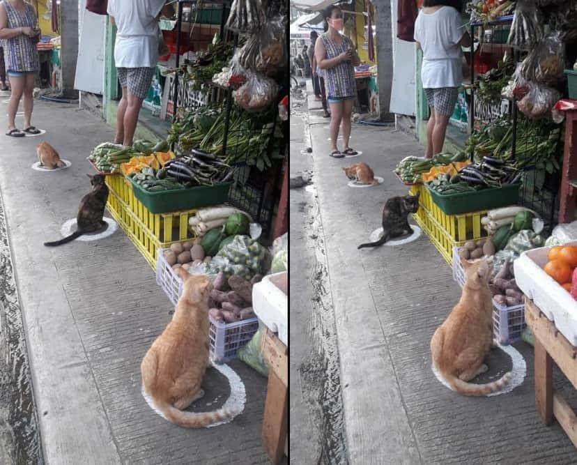 猫転送装置