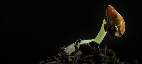 植物も早回しで見ると、そこはかとなくエイリアン