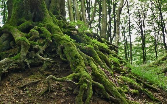 root-276636_640_e