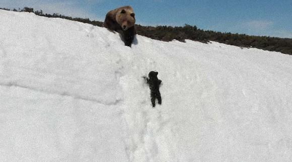 つるんつるん、何度も滑り落ちそうになりながら雪の斜面を必死に登ろうとするクマの子の懸命さに心が震える(ロシア)