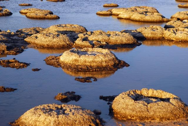 地球最古の生命体「ストロマトライト」 ごくわずかに現存する生きた個体を発見(タスマニア)
