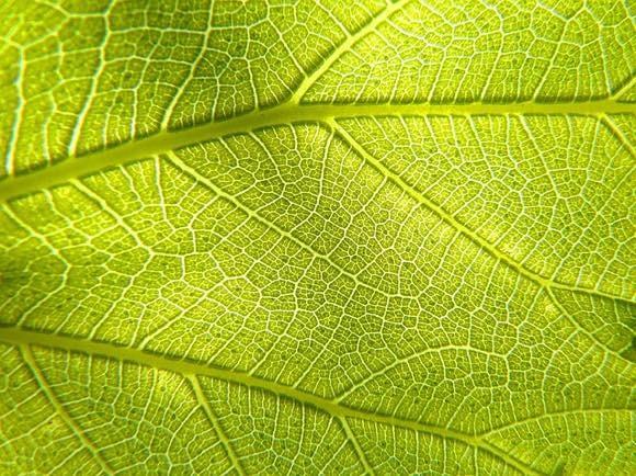 動物でも光合成ができる可能性が。血管に藻類を注入することで細胞に酸素を供給できることが判明(ドイツ研究)