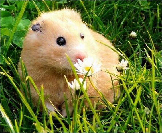 hamsters_06