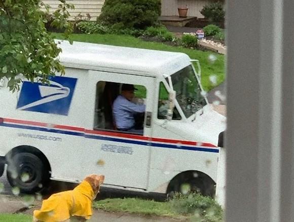 雨の日も風の日も...大好きな郵便配達員を毎日待ち続ける犬(アメリカ)