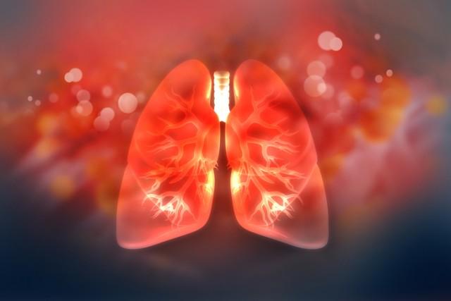 死亡後に摘出した損傷の激しい人間の肺をブタに移植して再生することに成功(米研究)