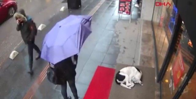 冷たい雨の日にカフェの軒先にいた野良犬。トルコで野良犬にやさしさを示した女性がいた。