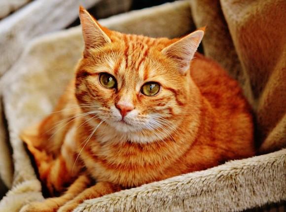 猫は最高の癒し。イギリスの独身男性の3分の1が「猫を飼ったことは今までしたことの中で最高のこと」と回答